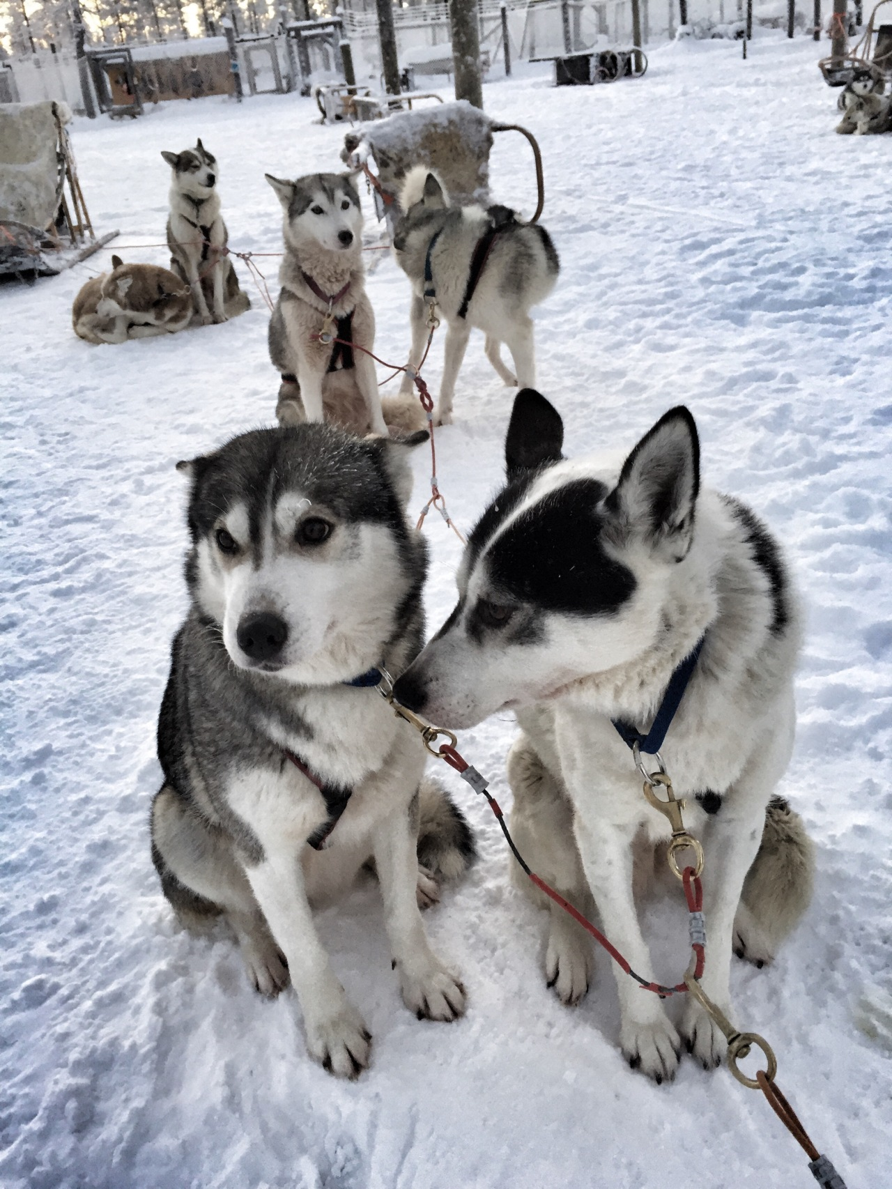 Kakslauttanen Arctic Resort – Dog Sledding & The Majesty of The Northern Lights